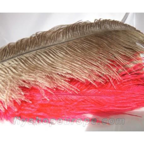 Avestruz (pluma completa)