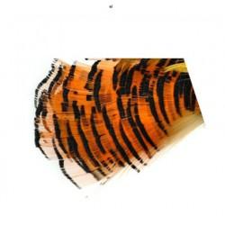 Faisan Dorado (10 plumas)