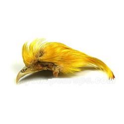 Faisan Dorado (Cresta Amarilla)